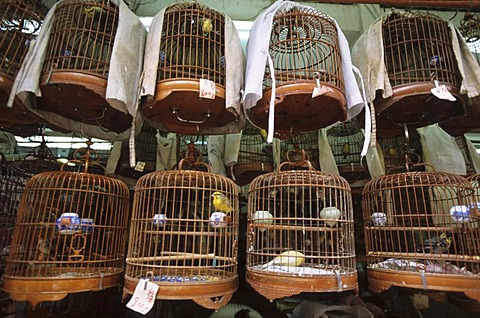 Bird market in Mong Kok, Kowloon, Hongkong, China