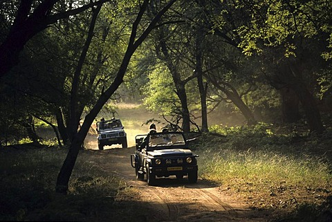 Ranthambhore National Park, safari with cross-country car, Ranthambhore, India