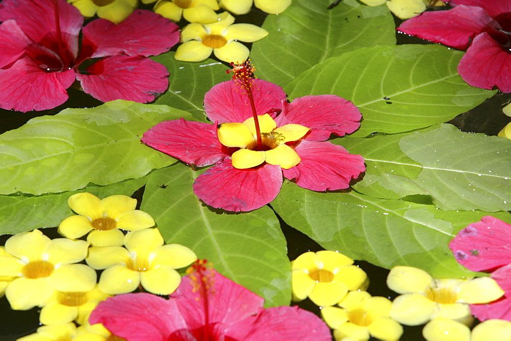 Floral arrangement floating in water, Somatheeram Ayurveda Resort, traditional Ayurvedic medicine spa resort, Trivandrum, Kerala, India, Asia