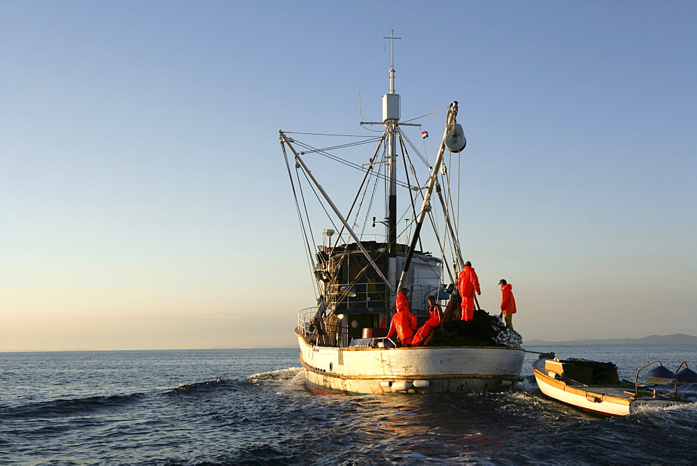 "Sardine fishing boat ""Jastreb, "" based in Kali on Ugljan Island, at a fishing site off of Pag Island in the Adriatic, Croatia, Europe"