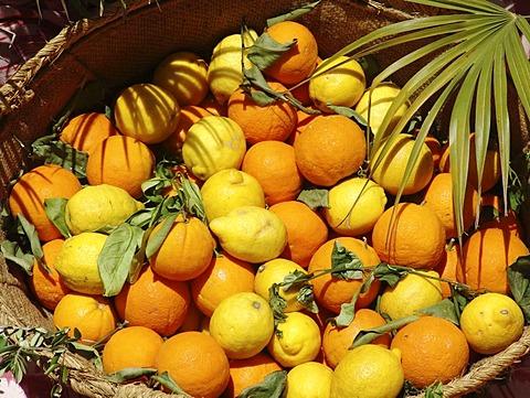 ESP, Spain, Balearic Islands, Mallorca : Oranges and Lemons