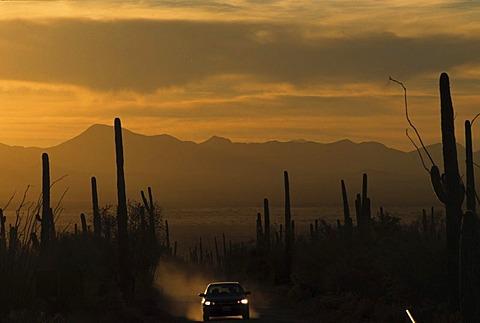 USA, United States of America, Arizona: Saguaro National Park, near Tucson, dirtroad at sunset.