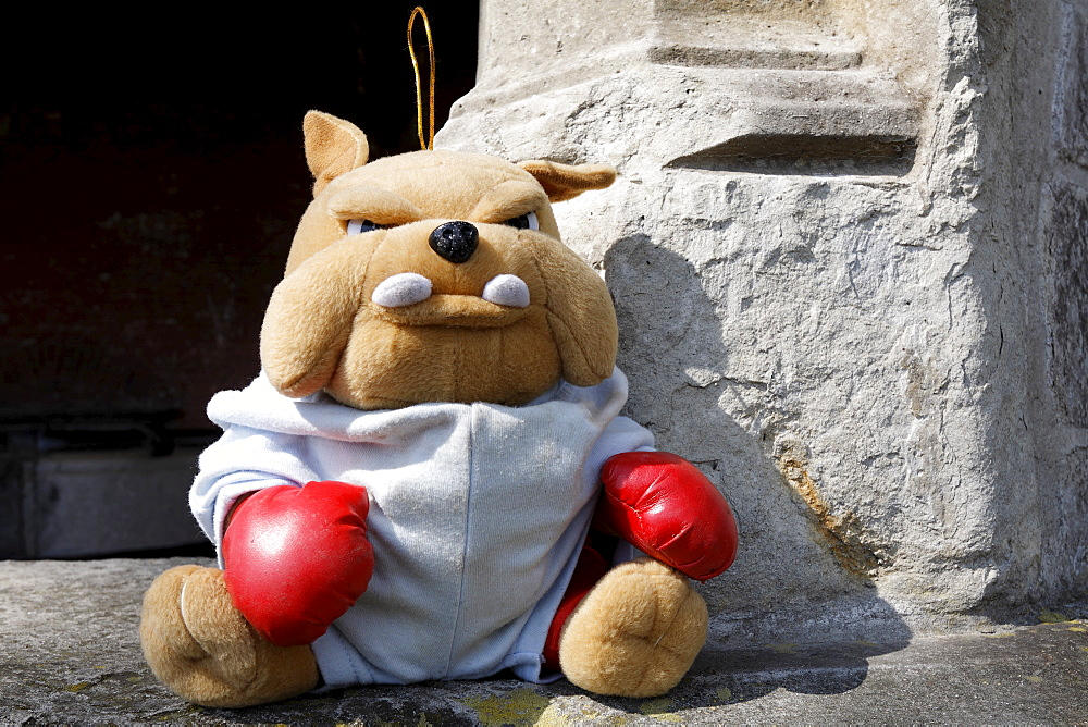 Stuffed toy bulldog wearing red boxing gloves