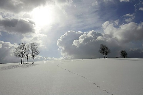 Winter landscape in back light, Wipperfuerth-Kupferberg, North Rhine-Westphalia, Germany