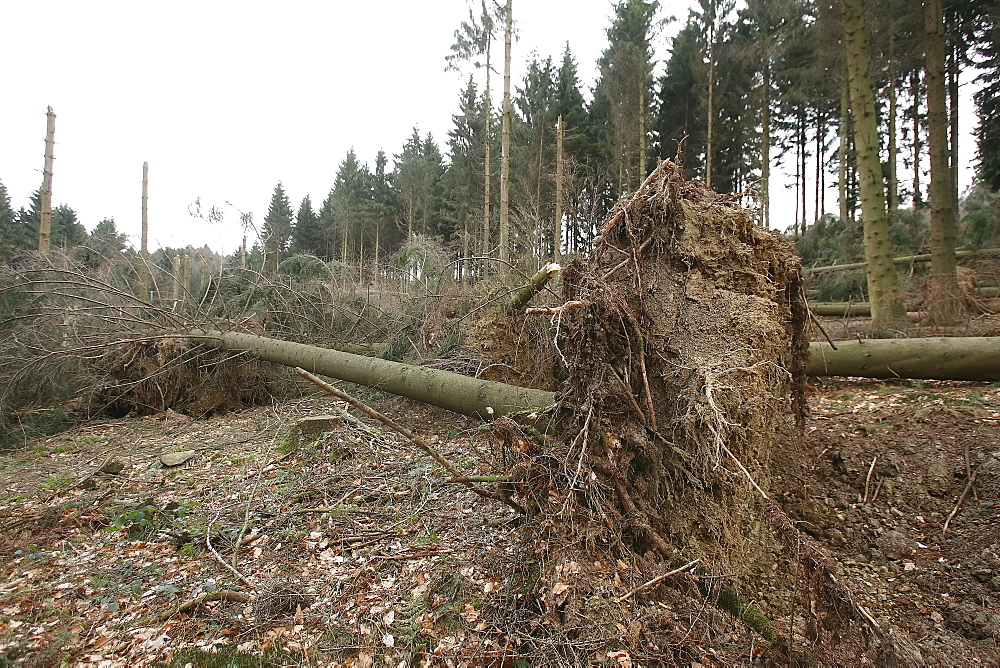 Storm damage in a forest near Duesterohl, North Rhine-Westphalia, Germany