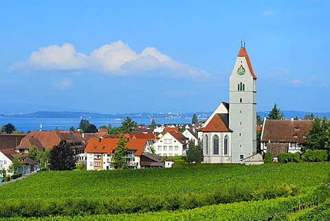 Hagnau, wine village on Lake Constance, Bodensee district, Baden-Wuerttemberg, Germany, Europe