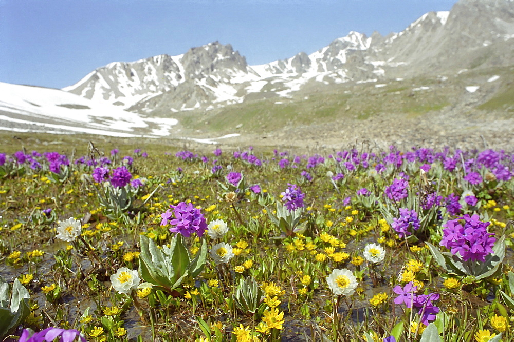 Alpine meadows. National park Ili Alatay, mountains Zailisky Alatau, Almaty area, Kazakhstan.