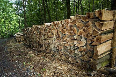 Piled logs of wood