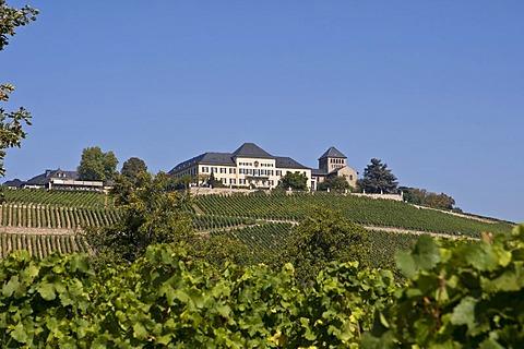 Johannisberg Castle, winery, Rheingau (Rhine District), Hesse, Germany