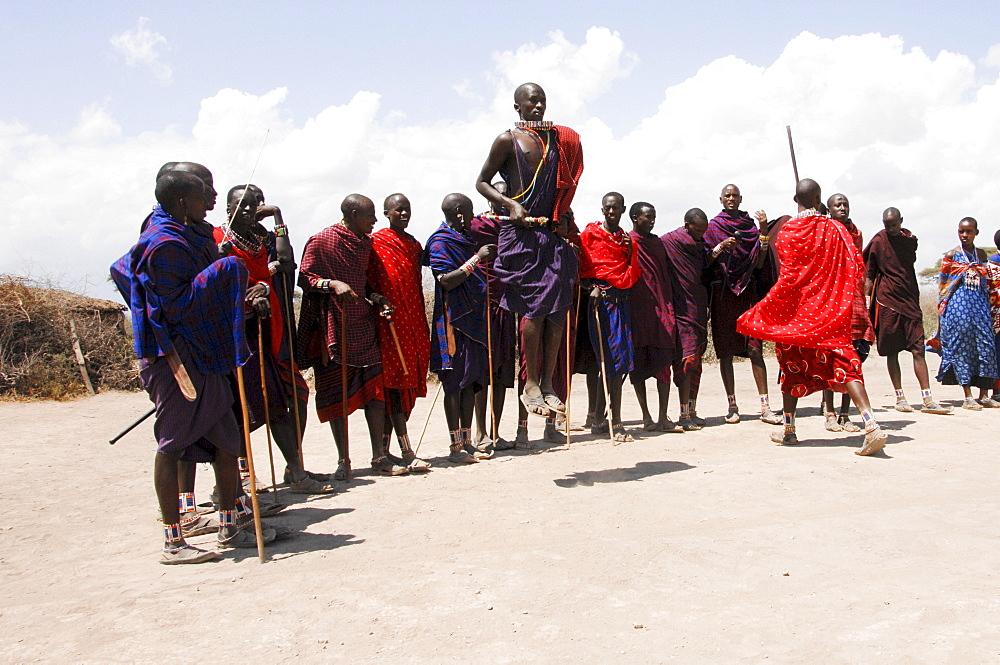 Massai, Massai warriors having a traditional dance, Amboseli national park, Kenya, Africa