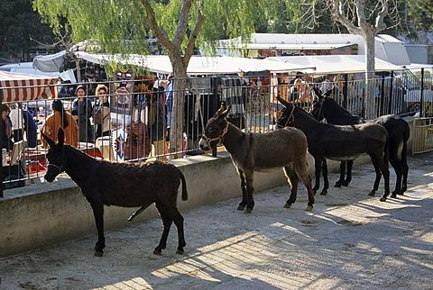 Mallorca Sineu Wednesday market donkey