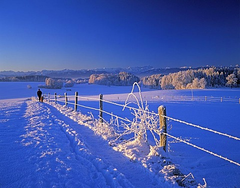 Winter morning Alps Muensing Upper Bavaria Germany