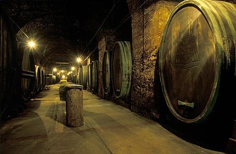 Wine cellar Seggau castle in Leibnitz Styria Austria