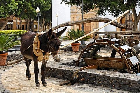 Water wheel with donkey in Pajara , Fuerteventura , Canary Islands