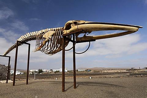 Skeleton of a whale , Las Salinas , Fuerteventura , Canary Islands