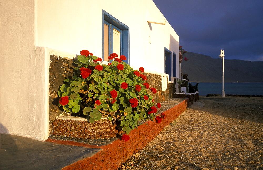 Geranium, Caleta de Sebo, La Graciosa, Canary Islands, Spain