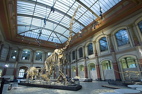 Dinosaur hall, children, Museum of Natural History, Berlin, Germany