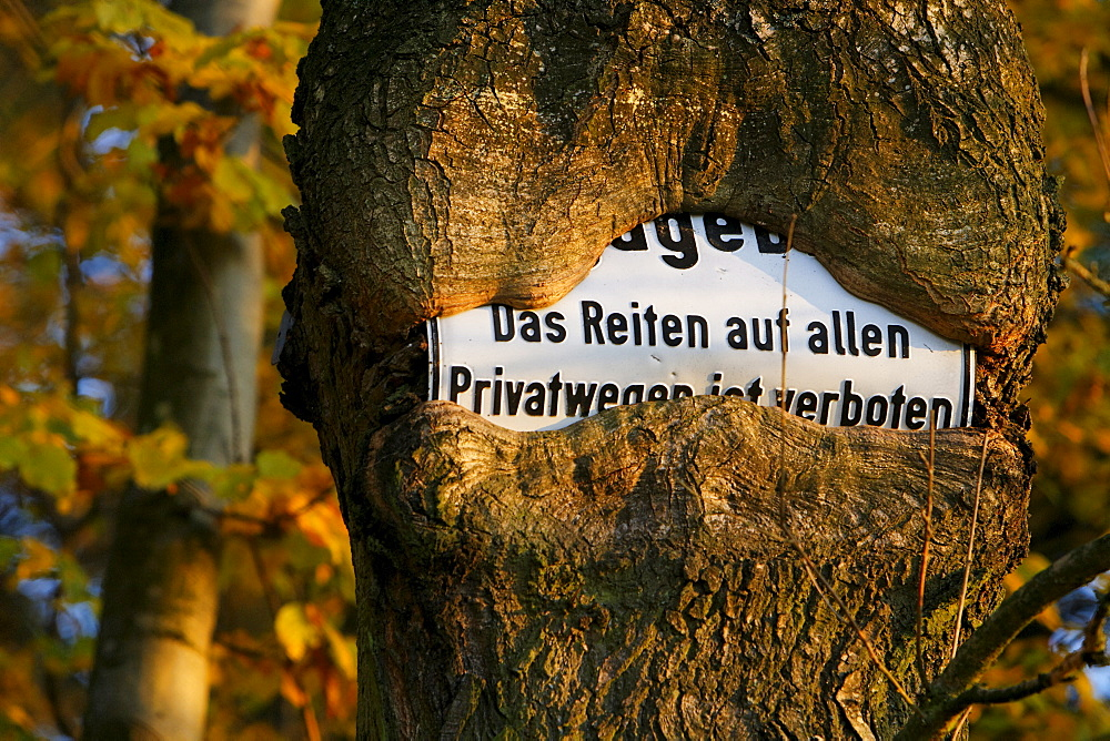 Sign prohibiting horse riding on private roads, sign grown into a tree