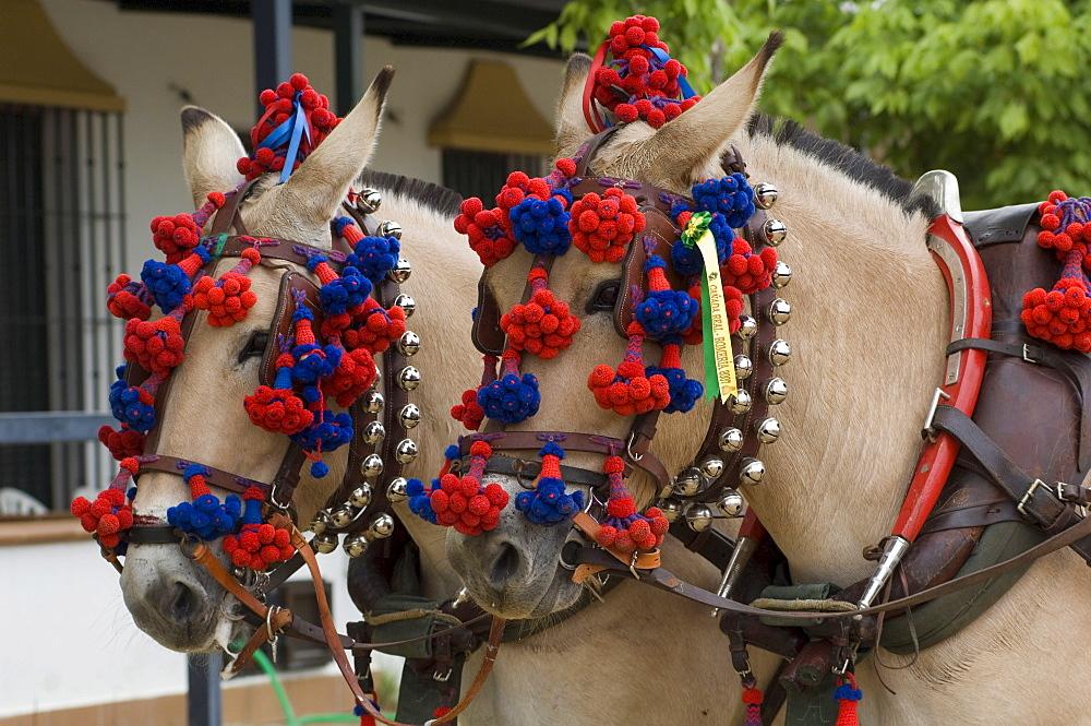 Horses decorated for a Pentecost pilgrimage in El Rocio, Andalusia, Spain, Europe