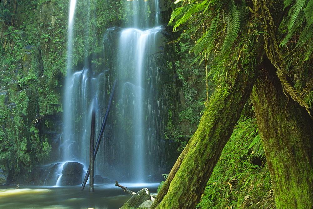 Beauchamp Falls, Otway National Park, Victoria, Australia, Oceania