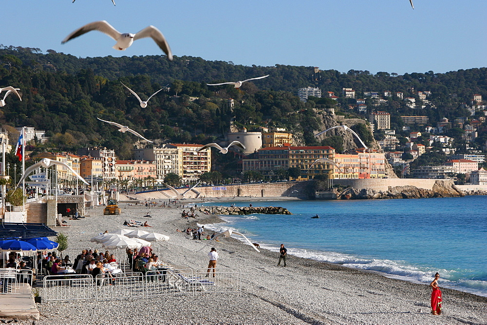 Seagulls flying over the beach, Nice, Cote d'Azur, France