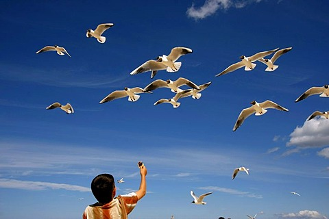 Small boy feeding flying seagulls on Jurmala Beach, Latvia, Baltic Countries