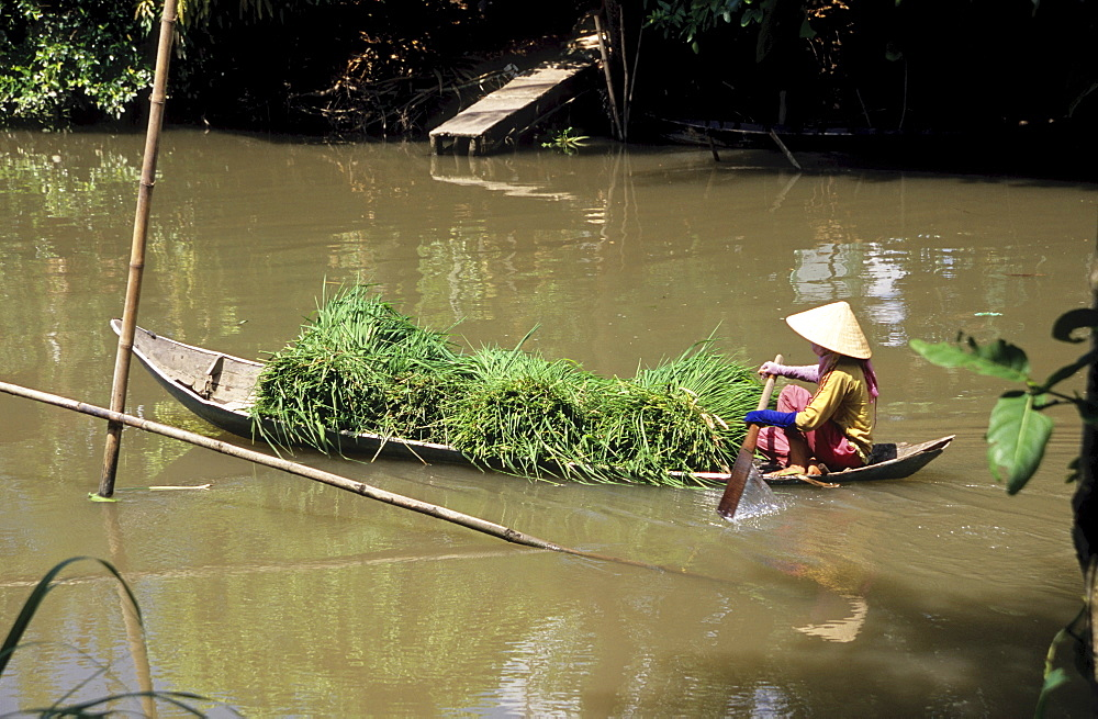 Heavily-laden canoe, woman transporting river grasses, Mekong Delta, Vietnam, Asia