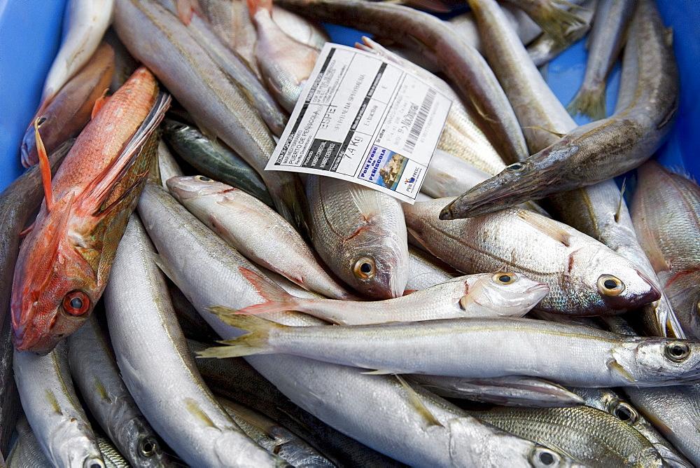 Sea fish for sale