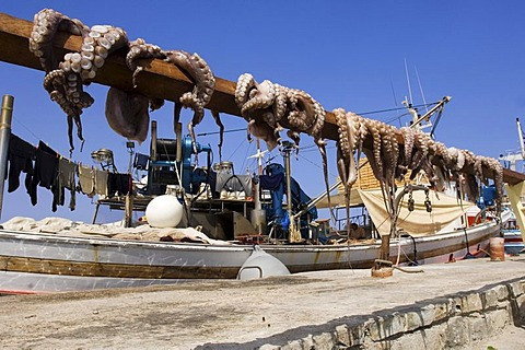 Cuttlefish, drying in the sun in front of a fishing boat, Naoussa, Cyclades, Greece.