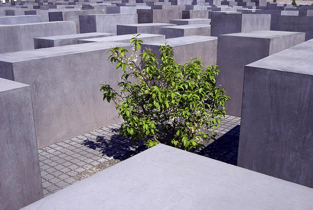Memorial for the murdered Jews of Europe, Holocaust memorial, small trees and bushes between the concrete steles, Berlin, Germany, Europe
