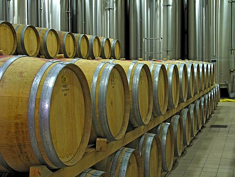 Wine cellar with wooden barrels and stainless steel containers