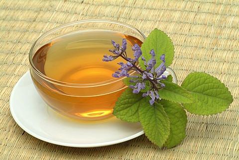 Tea made of Zulu cockspur flower, herbtea, Plectranthus zuluensis,
