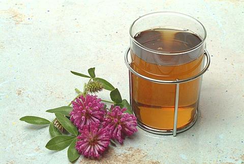 Herb tea made of red clover, Trifolium pratense