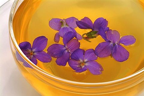 Herb tea made of Viola odorata, Blue Violet, Sweet Violet