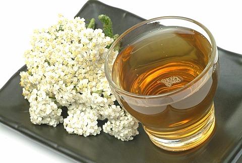 Yarrowtea, herb tea, milfoil, achillea millefolium