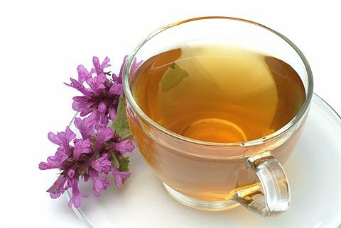 Herb tea made of Betony, Woundwort, Stachys officinalis, Betonica officinalis