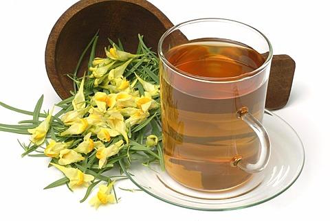 Herb tea made of yellow toadflax, Linaria vulgaris, Linaria