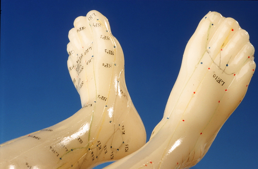 Acupuncture points of human feet, model