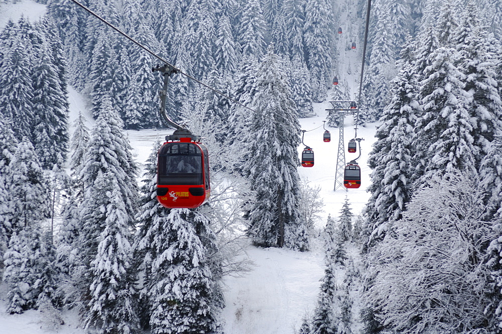 Gondola cableway passing through wintry spruce forest, going from the Krienseregg up to the Fraekmuentegg, Lucerne, Switzerland, Europe