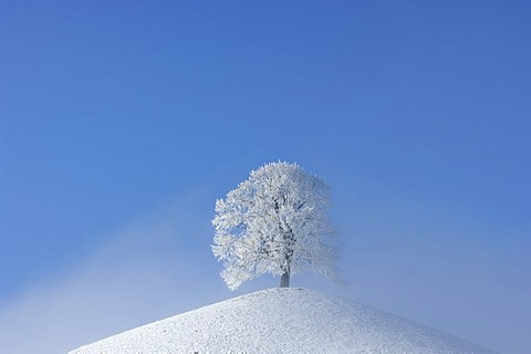 Frost-covered tree (hoar frost) on a moraine, central Switzerland, Europe