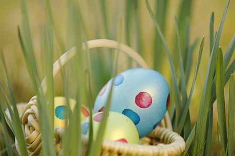 Easter eggs in basket - 832-351200