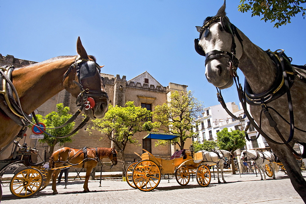 Horse-drawn carriages, Seville, Andalusia, Spain, Europe