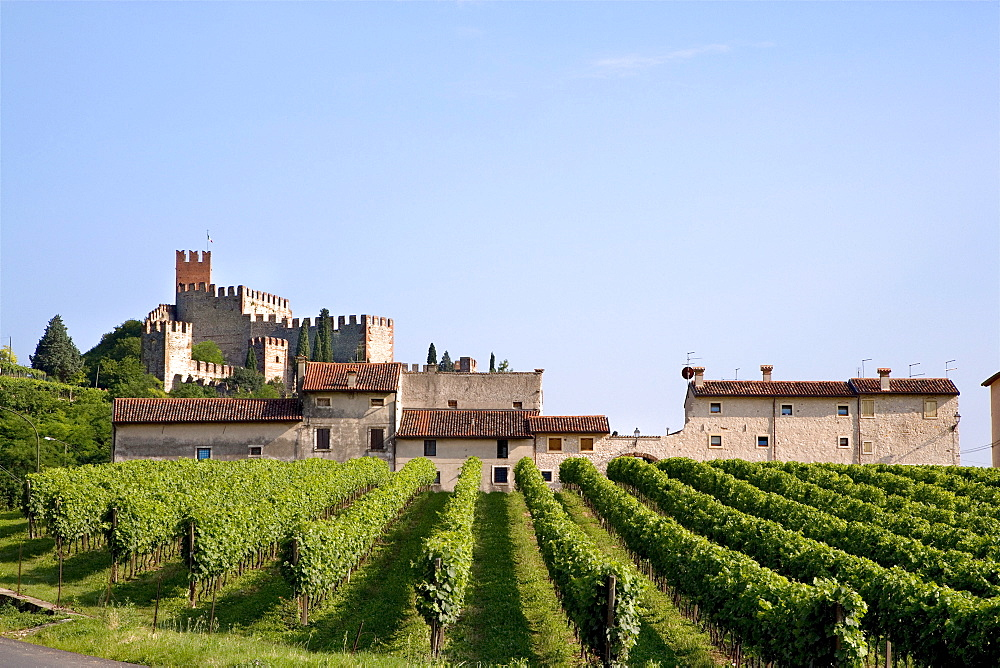 Grape vines in front of a castle, Soave, Venice, Italy, Europe