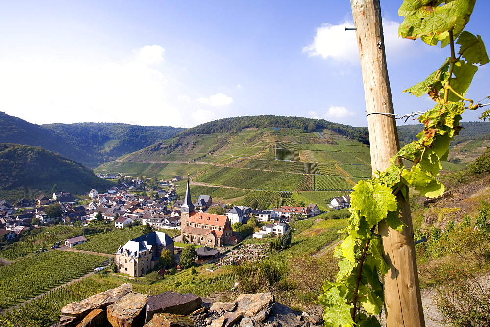 View of Mayschoss, vineyards, Ahrtal Valley, Eifel Range, Rhineland-Palatinate, Germany, Europe