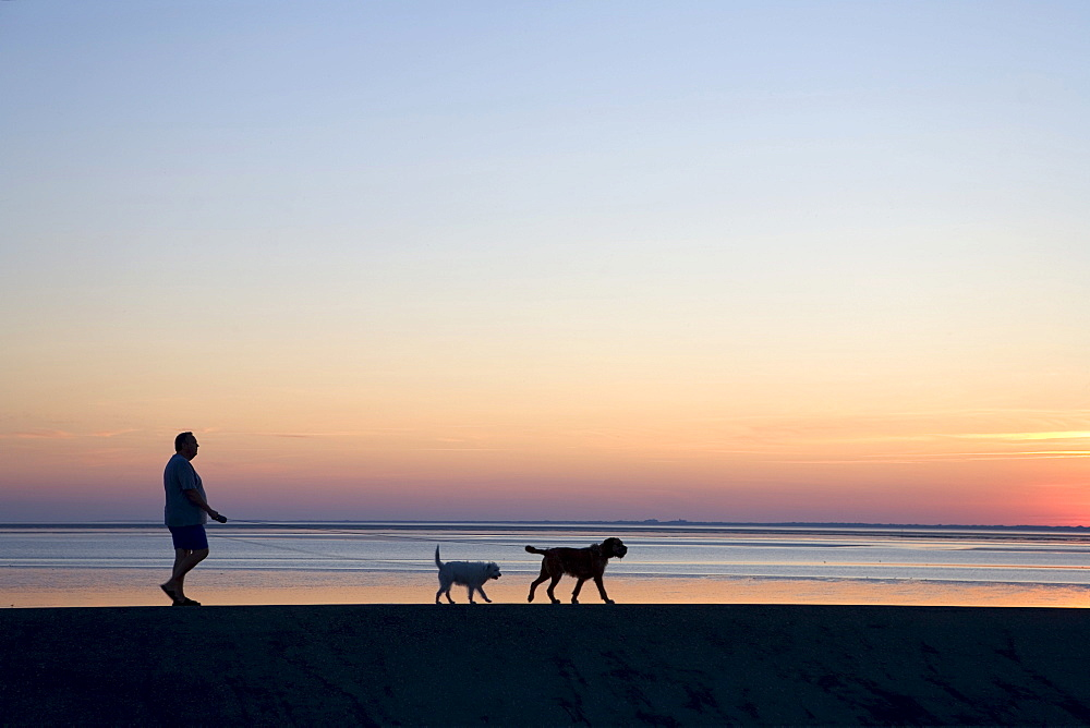 Man walking with dogs on a dyke along the intertidal zone, sunset, Norddeich, East Frisia, Lower Saxony, Germany, Europe