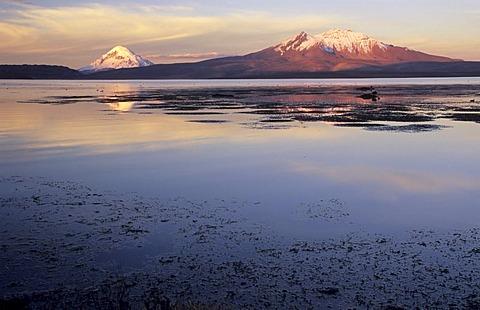 Volcanoes Sajama (6542 m) and Cerro de Quisiquisini (5518 m) at Lago Chungara, Lauca National Park, Chile