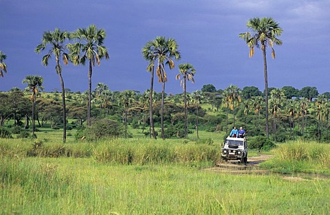 Landrover on a dirt road in Tarangire national park, Tanzania - 832-355439