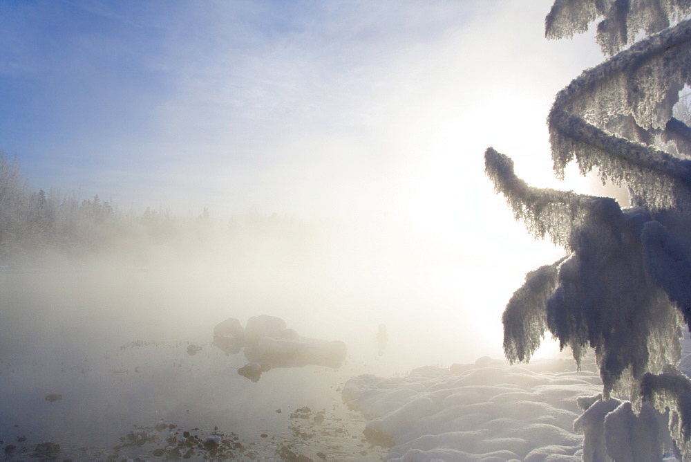 Frost-covered branches in the sunlight and mist, Takhini Hot Springs, Yukon Territory, Canada