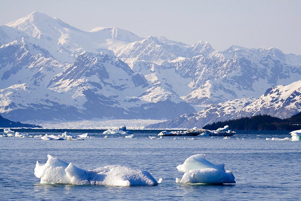 Drifting ice blocks, Columbia Bay, Columbia Glacier behind, Pacific Coast, Chugach National Forest, Prince William Sound, Alaska, USA