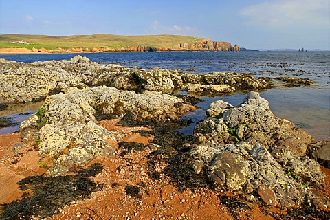 Coastal landscape, Braewick Beach, red granite rocks and rock needles of Stoura Pund and The Drongs rock formation on the right, Northmavine, North Mainland, Shetland Islands, Scotland, UK, Europe